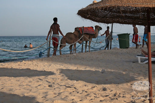 Até na praia passavam camelos no fim do dia!