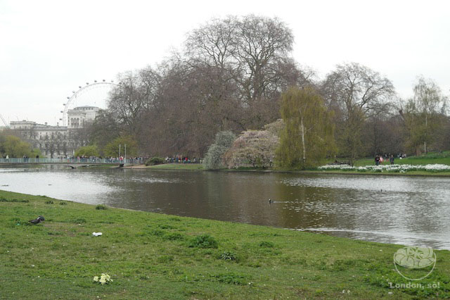 St James's Park oferece vistas lindas da London Eye.