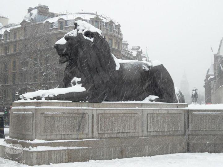 Um dos famosos leões da Trafalgar Square coberto de neve.