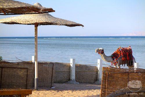 Sharm el Sheikh, Egito
