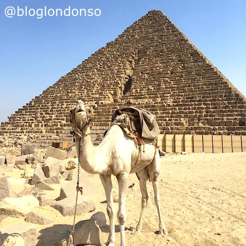 Pirâmides do Egito e camelo.
