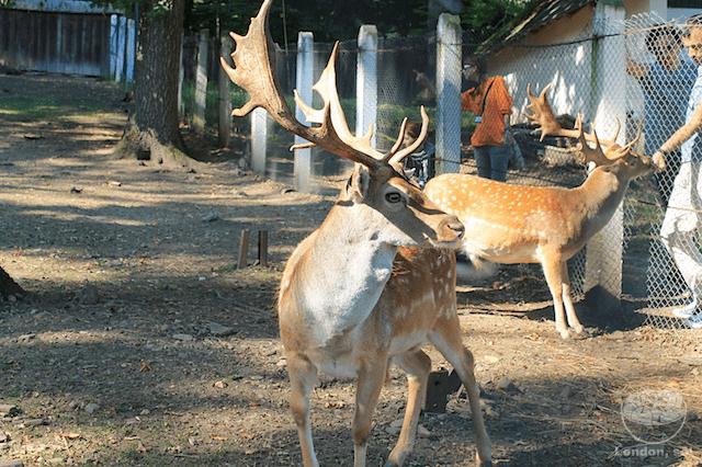 zoologico-neamt-romenia-3
