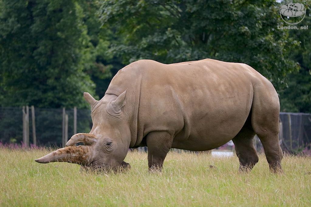 Londres e arredores com crianças: Woburn Safari Park