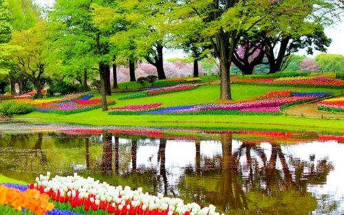 Tulipas na Holanda: visite o Parque Keukenhof