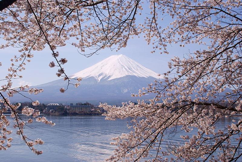 Cerejeiras do Japão: guia completo para uma viagem perfeita