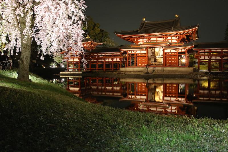 cerejeiras no japão byodo-in