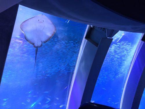 Hakkeijima Sea Paradise: mais que um aquário em Yokohama!