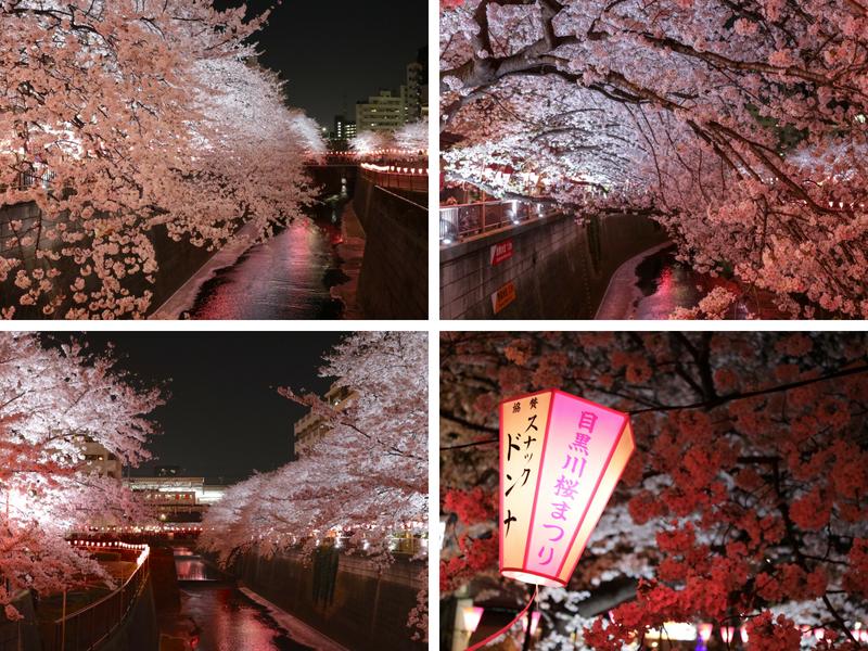 cerejeiras no japão cerejeiras do japão